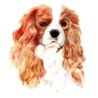 Cavalier King Charles Blenheim Clock
