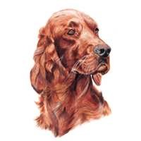 Irish Setter Head Clock