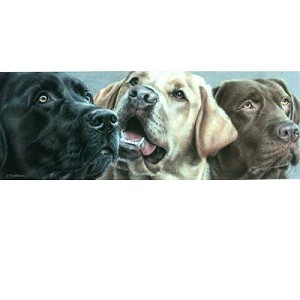 Dark Milk Chocolate Print  ( Three Labs) by Angela Davidson