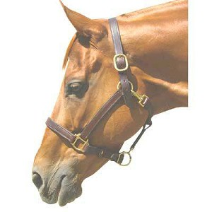"3/4"" Stable Halter"