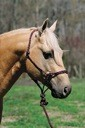 Lami-Cell Horse Mountain Rope Halter