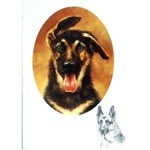German Shepherd Puppy Profile Card 6 Pack