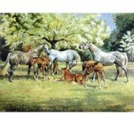 Spring Time Card 6 Pack (Horses)