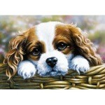 Take Me Home Card 6 Pack (Cavalier King Charles)