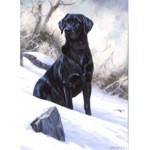Winter Boy Card 6 Pack (Labrador Retriever)