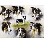 Profiles of the Border Collie Card 6 Pack