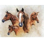 The Favourite Card 6 Pack (Horse)