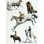 Sport Horses Card 6 Pack