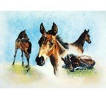 The Youngster Card 6 Pack (Foal)