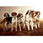 Magnificent Card 6 Pack ( Fox Hound)