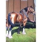 Handsome Card 6 Pack (Horse)