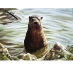 The Otter Card 6 Pack