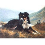 Tri Color Collie Card 6 Pack (Border Collie)