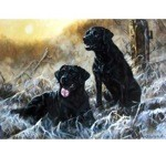 Winter Sun Card 6 Pack (Black Labradors)