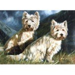 Highlanders Card 6 Pack (Highland Terriers)