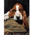 I'm Listening Card 6 Pack (Bassett Hound)