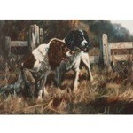 Raring to Go Card 6 Pack (English Springer)