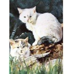 Kittens at Play Card 6 Pack (Cat)