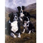 The Apprentices Card 6 Pack (Border Collies)