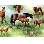 Susies Baby Card 6 Pack (Horses)
