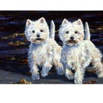 Perfect Partners Card 6 Pack (Highland Terrier)