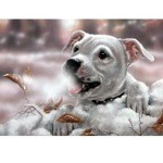 Winters Breath Card 6 Pack (Staffordshire Terrier)