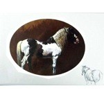 The Gypsy Cob Card 6 Pack (Horse)