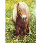 Out in the Meadow Card 6 Pack (Shetland Pony)