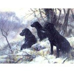 Three Wise Labrador Retrievers Card 6 Pack