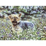 Yorkie Amongst the Flowers Card 6 Pack (Yorkshire Terrier)