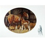 Contentment Card 6 Pack (Clydesdales)