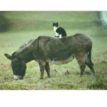 Sitting Pretty Card 6 Pack (Cat & Donkey)
