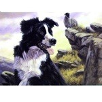 The Collie Card 6 Pack (Border Collie)