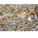 A Quiet Snooze Card 6 Pack (Fox)