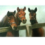 Foals Card 6 Pack (Horses)