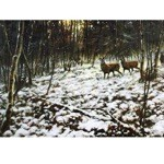 Christmas Eve Card 6 Pack (Deer)