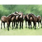 Fellowship Card 6 Pack (Horses)