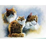 Grandma's Best Friend Card 6 Pack (Cat)
