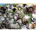 Sheep Breeds Card 6 Pack