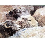 Amongst the Flock Card 6 Pack (Sheep)