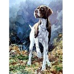 The Pointer Card 6 Pack (German Shorthair Pointer)