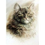 The Tabby Card 6 Pack (Cat)