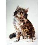 Tabby Kitten Card 6 Pack (Cat)