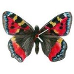 Small Red Butterfly Clock