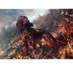 Irish Setter in the Field Print