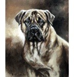 Head of Mastiff Print