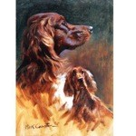 Profiles of an Irish Setter Print