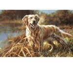 Golden Retriever in the Prairie Print