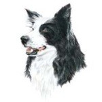 Border Collie Head Clock