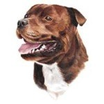 Staffordshire Bull Terrier Clock